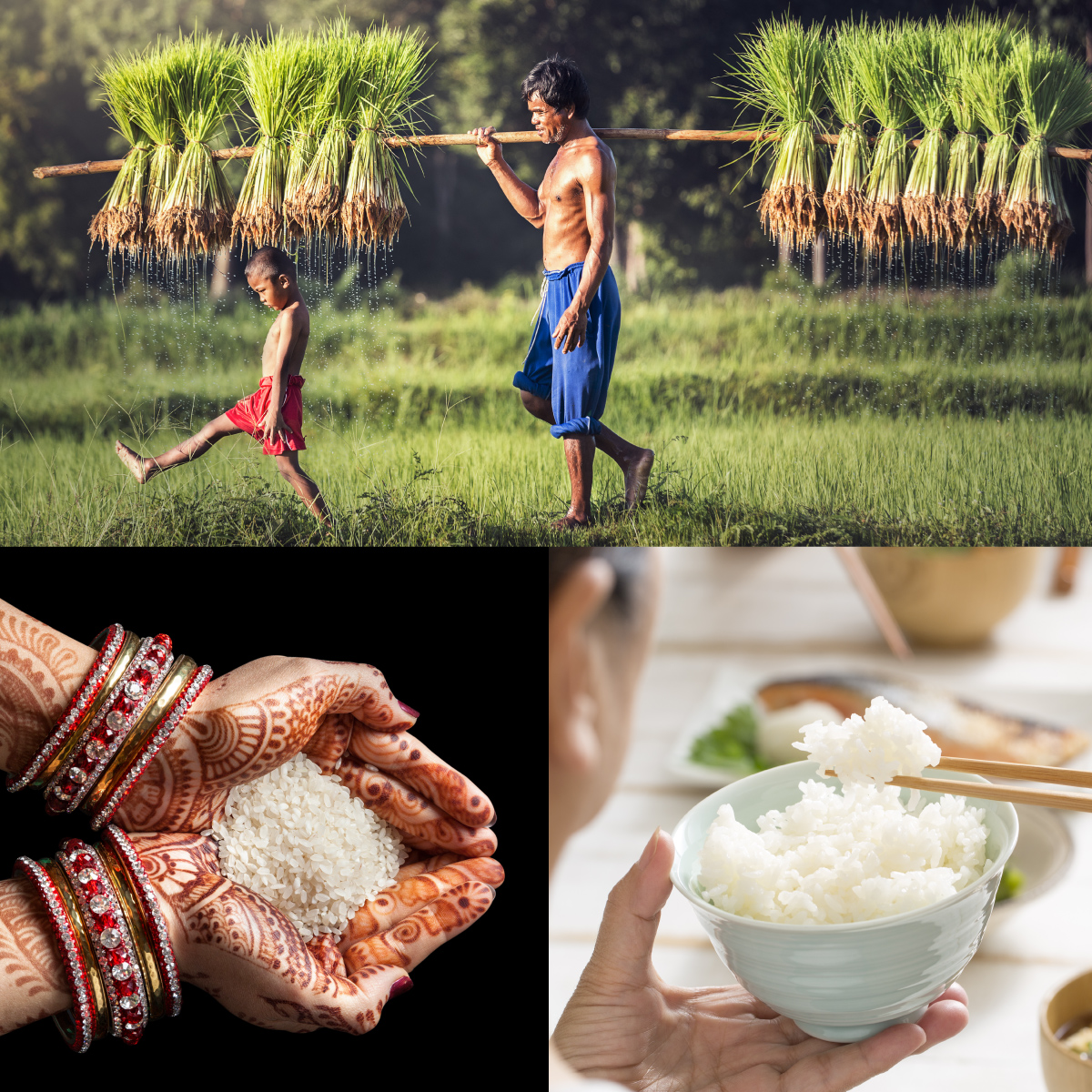 Rice field, Henna hands with rice, Bowl of rice